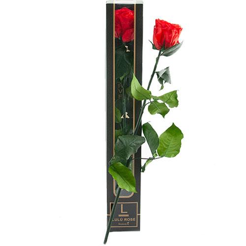valentijn lulu roos in luxe verpakking