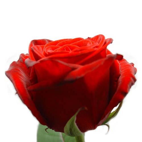 valentijntje, Liefde, Love, Meer Valentijn bloemen cadeaus, Bloemen, Valentijnsdag bloemen en rozen